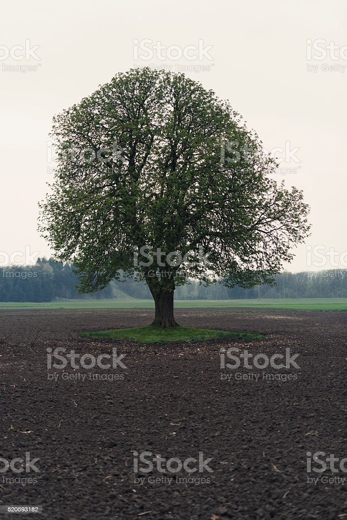 tree island stock photo