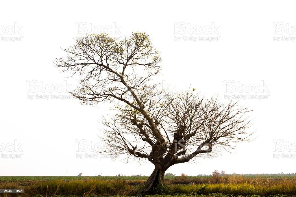 Tree isolated on white background. stock photo