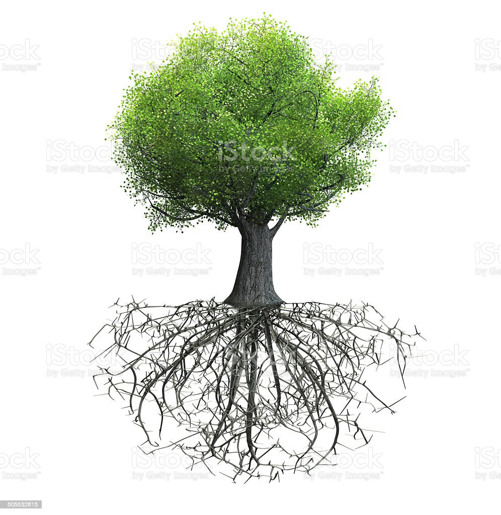 tree isolated stock photo