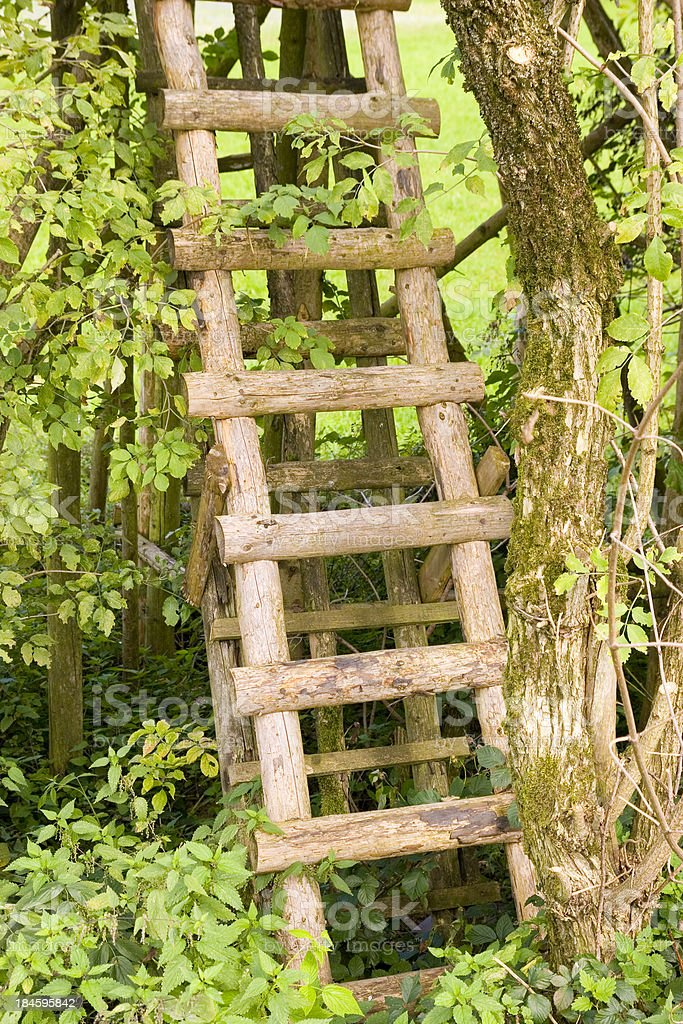 Tree Ladder stock photo