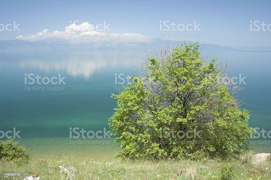 Tree, Lake and Mountain stock photo