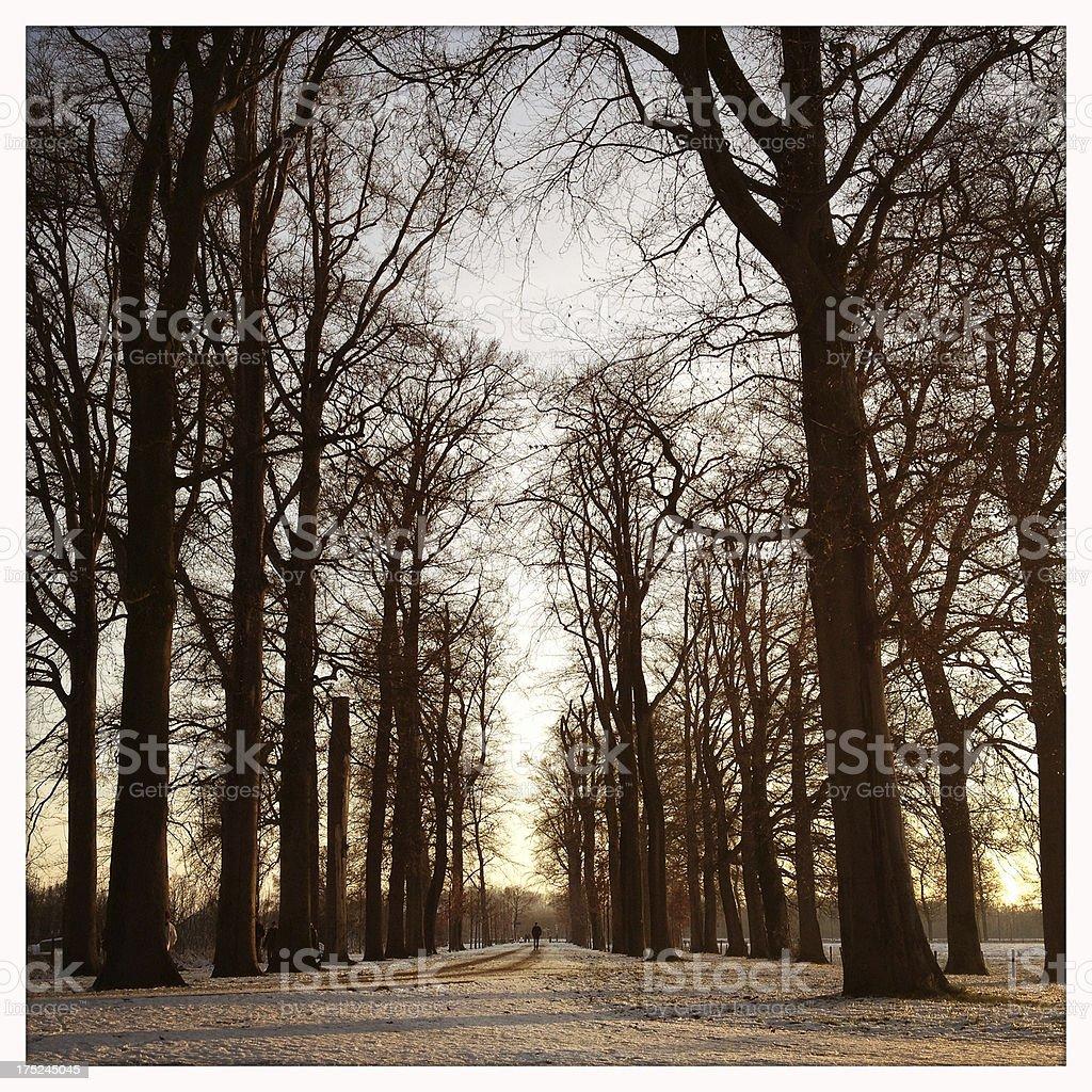 Tree lane royalty-free stock photo