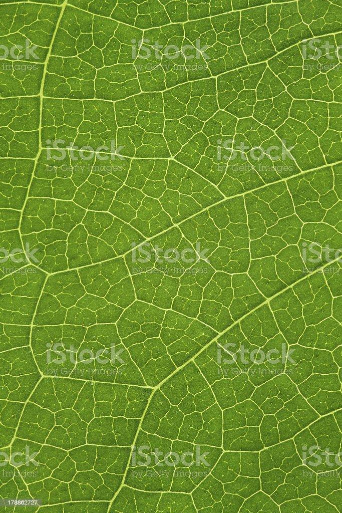 tree leaf background royalty-free stock photo