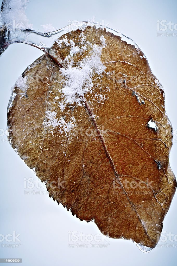 Tree leaf covered with ice royalty-free stock photo