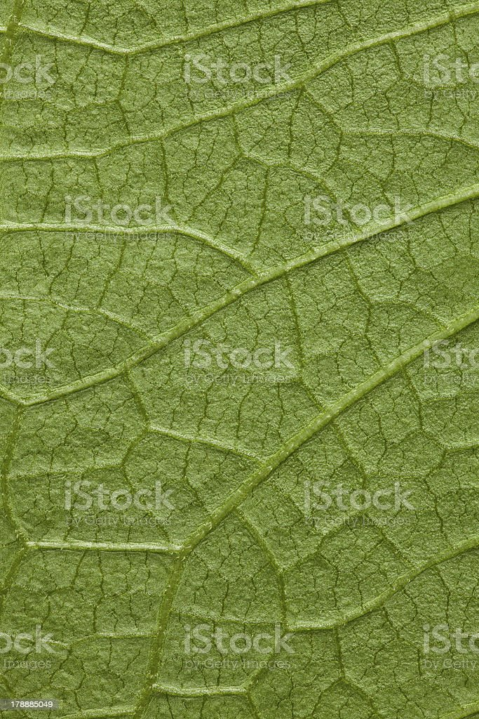 tree leaf green background royalty-free stock photo