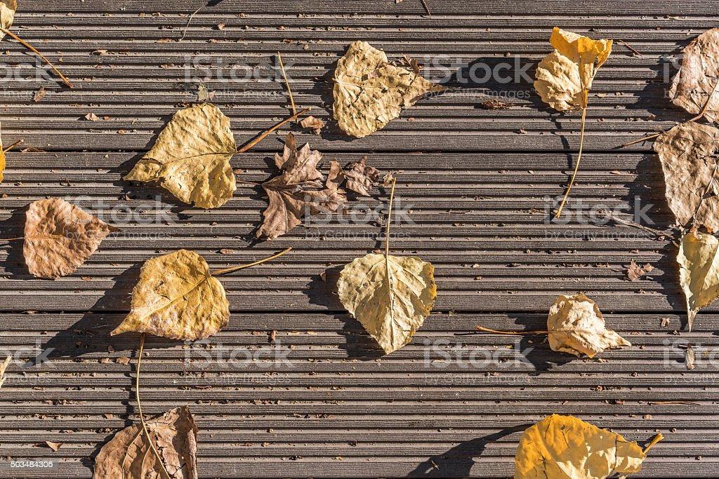 tree leaf on the wood stock photo