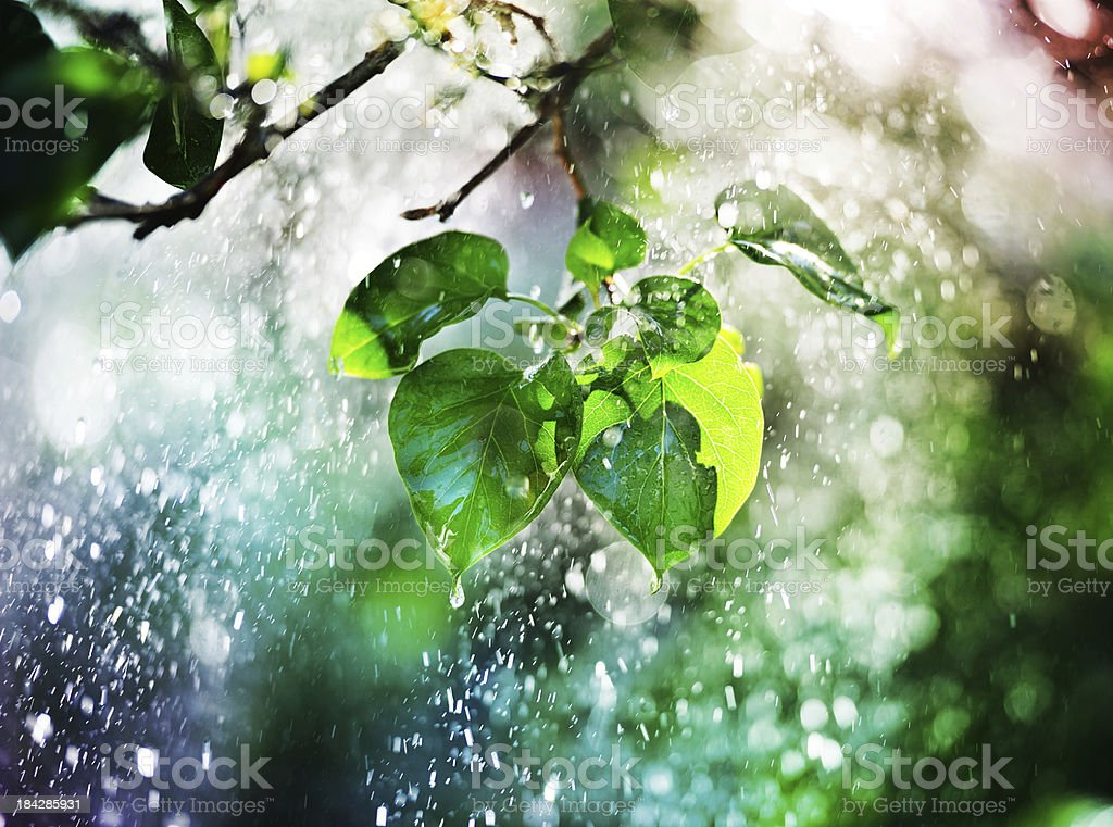 Tree, leafs and pouring rain in sunset royalty-free stock photo