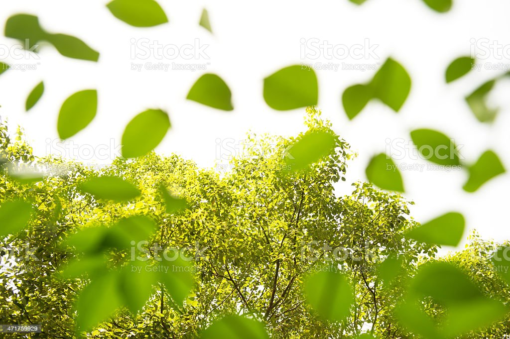 Tree Leaves Abstract royalty-free stock photo