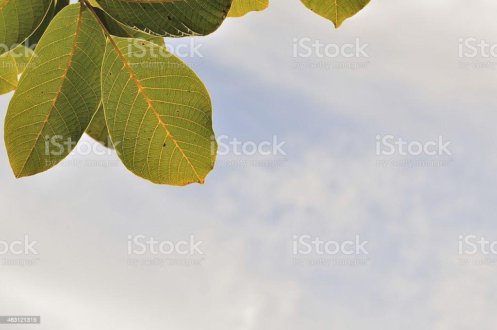 Drzewo liście przeciwko niebo zbiór zdjęć royalty-free