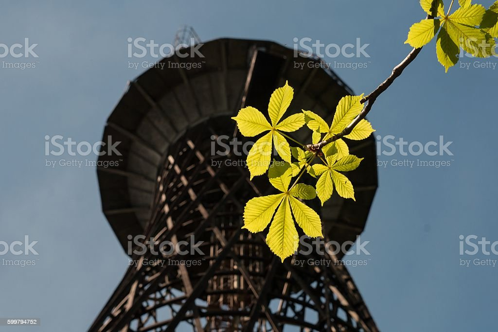 Tree leaves on metal construction background stock photo
