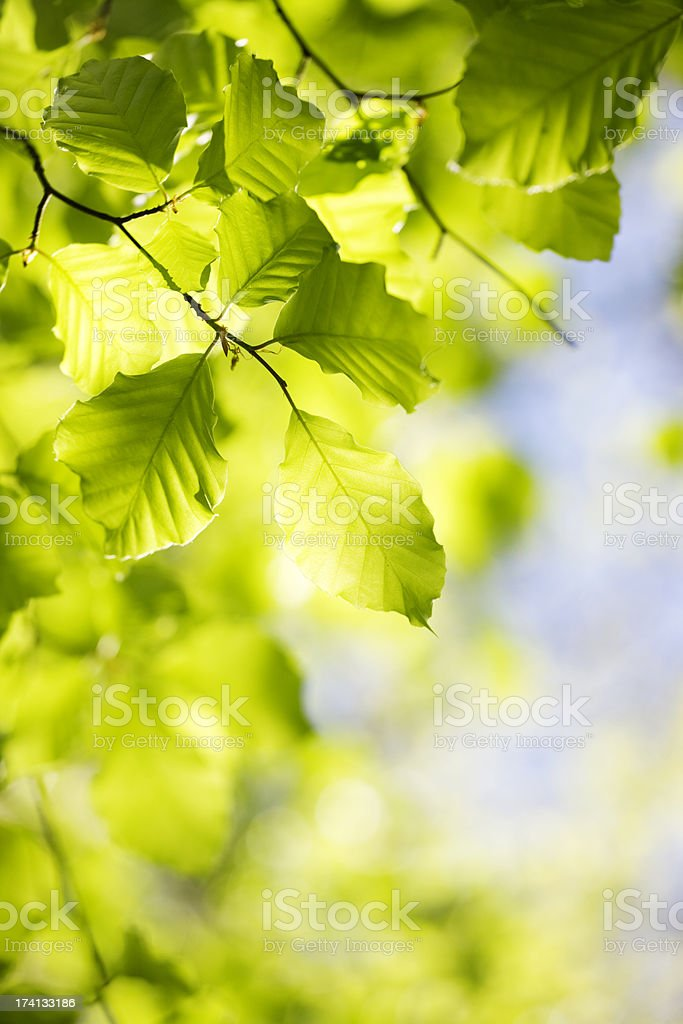 Tree leaves royalty-free stock photo