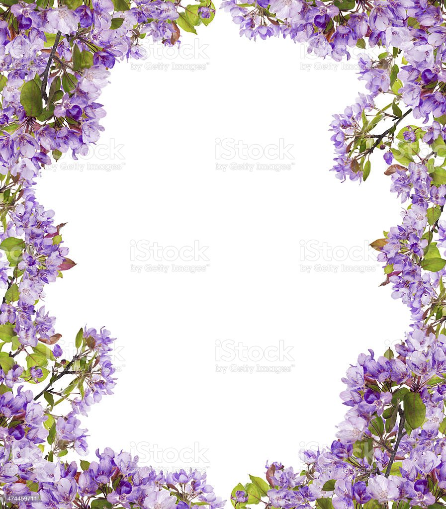 tree lilac flower branches frame stock photo