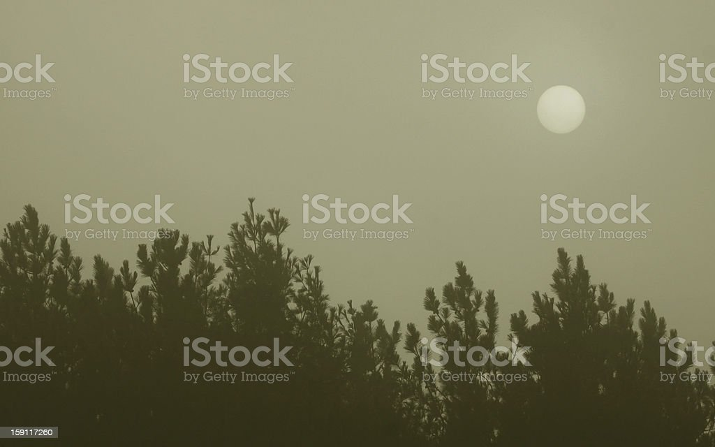 Tree Line Hazy Sun royalty-free stock photo