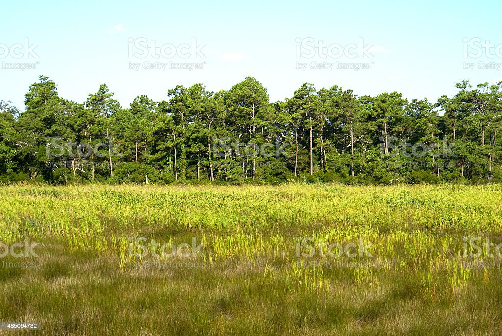 Tree Line in Field stock photo