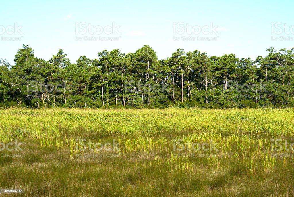Tree Line in Field stock photo