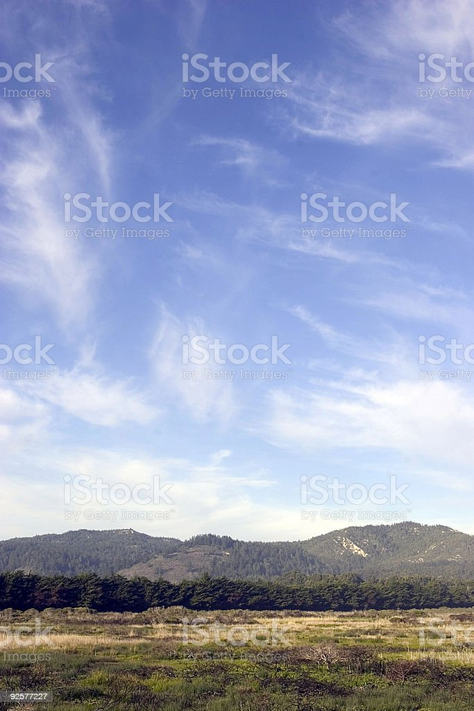 Tree line vertical royalty-free stock photo