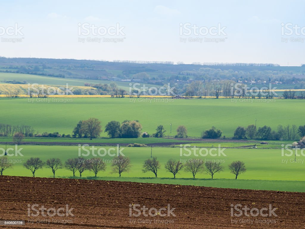 Tree line with green spring fields stock photo