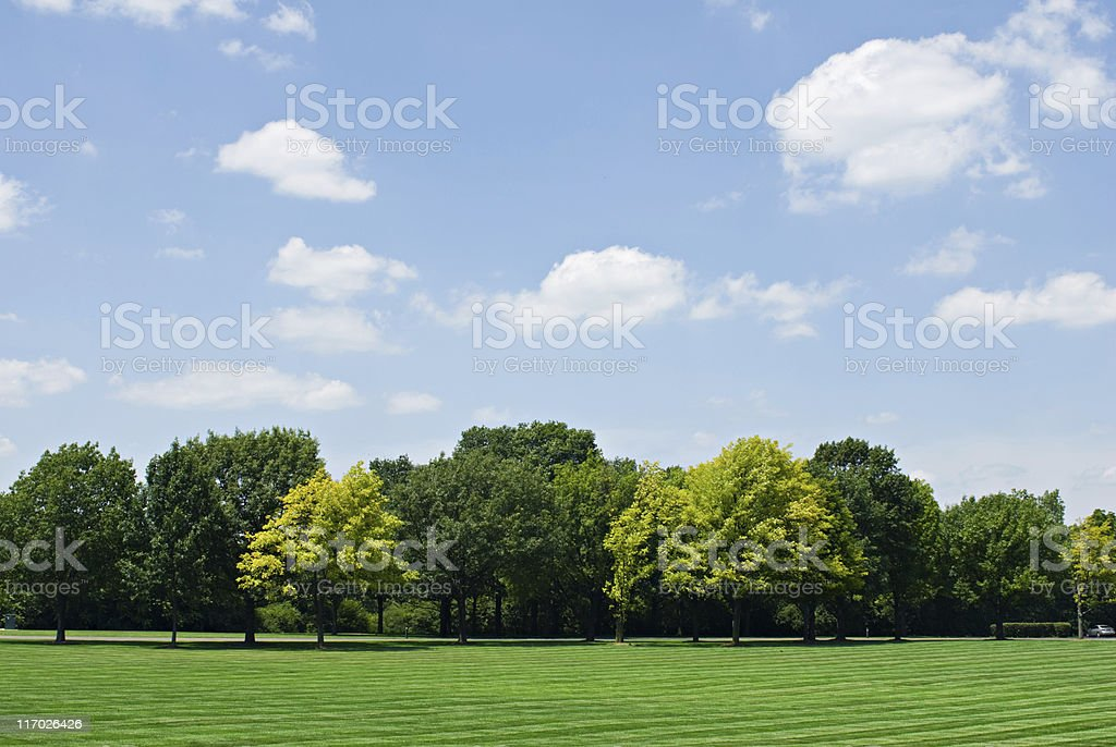 Tree Line with Sky stock photo