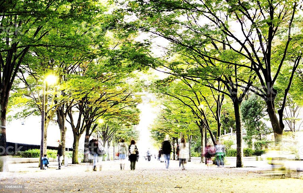 Tree lined avenue stock photo