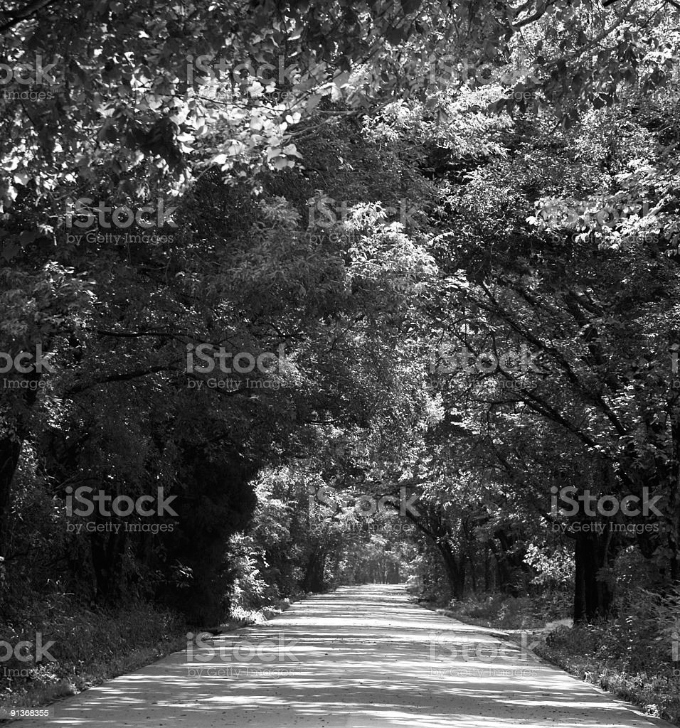 Tree Lined Country Road stock photo