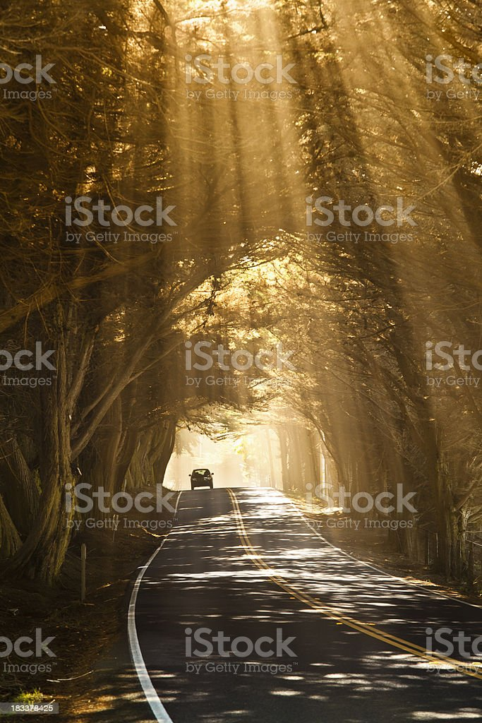 Tree lined misty road royalty-free stock photo