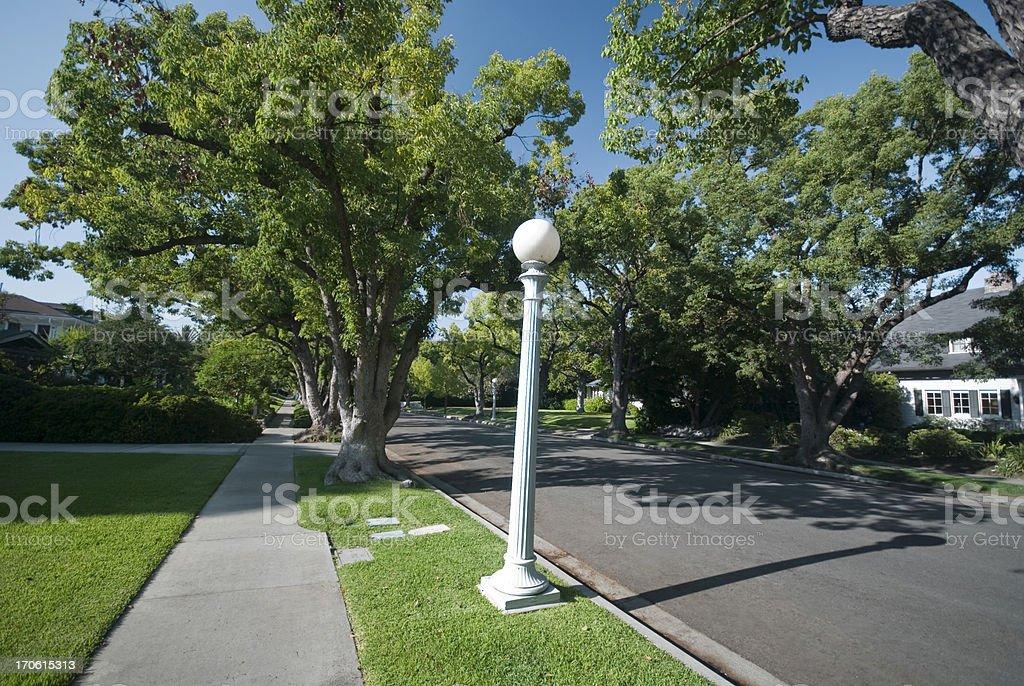Tree Lined royalty-free stock photo