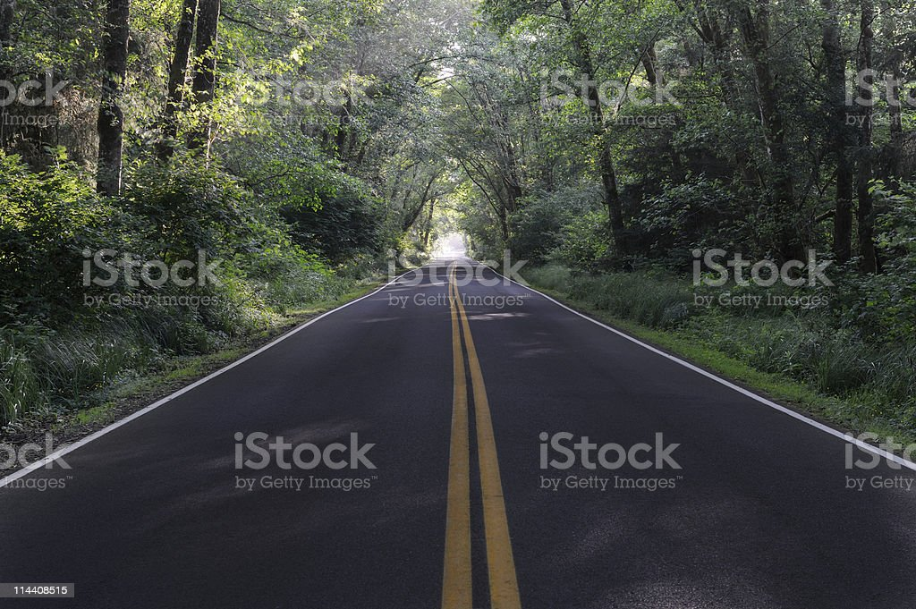 Tree Lined Road in the Evening stock photo
