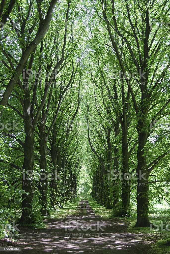 Tree Lined Road royalty-free stock photo