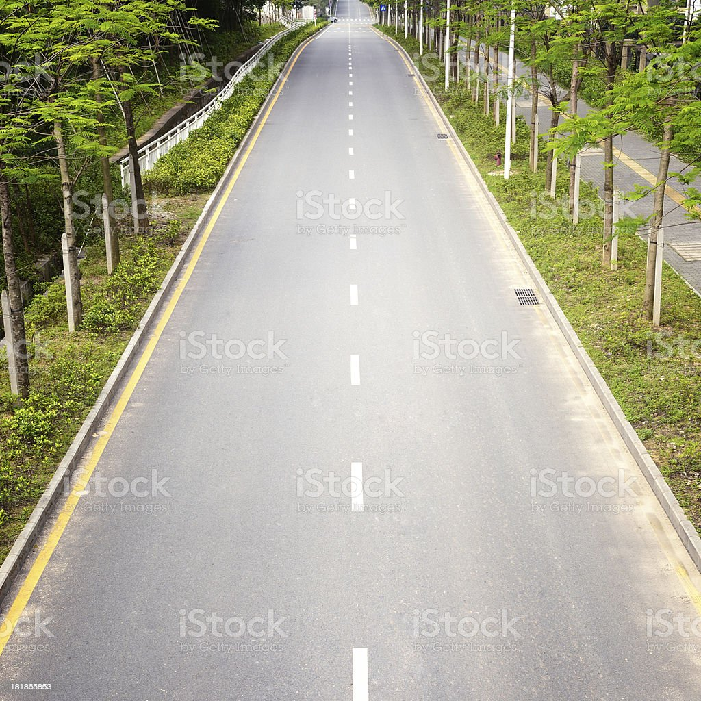 Tree Lined Road royalty-free stock photo