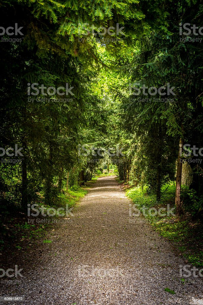 Tree lined road stock photo