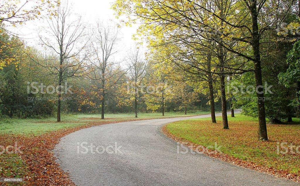 tree lined road stock photo