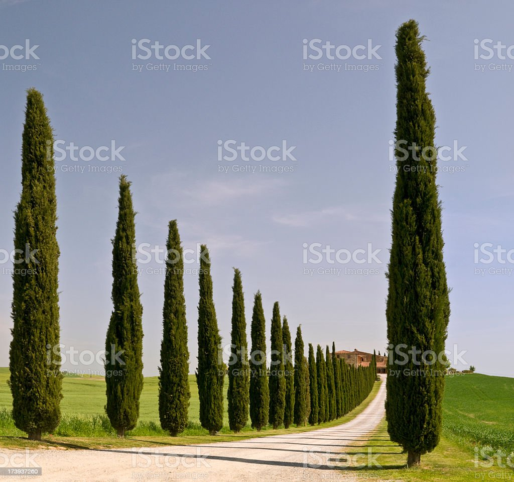 A tree lined road to a Tuscan farmhouse in the distance stock photo
