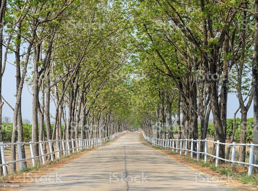 Tree lined road to farm stock photo