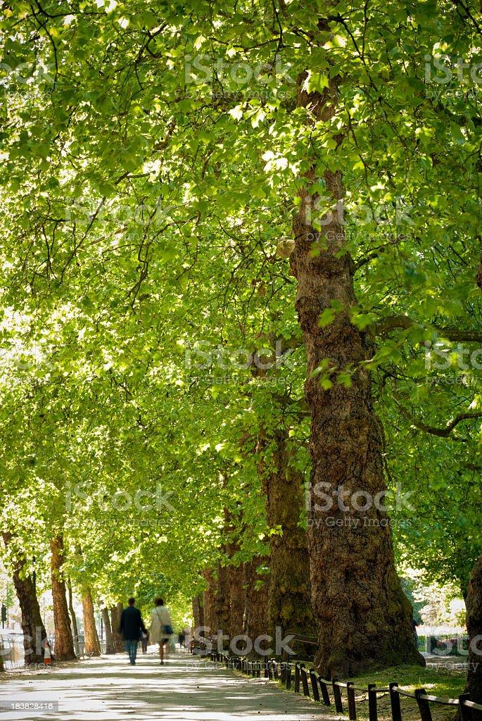 Tree lined street, London, England stock photo