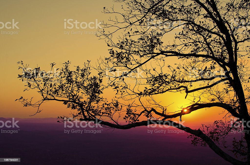 Tree Lined Sunset stock photo