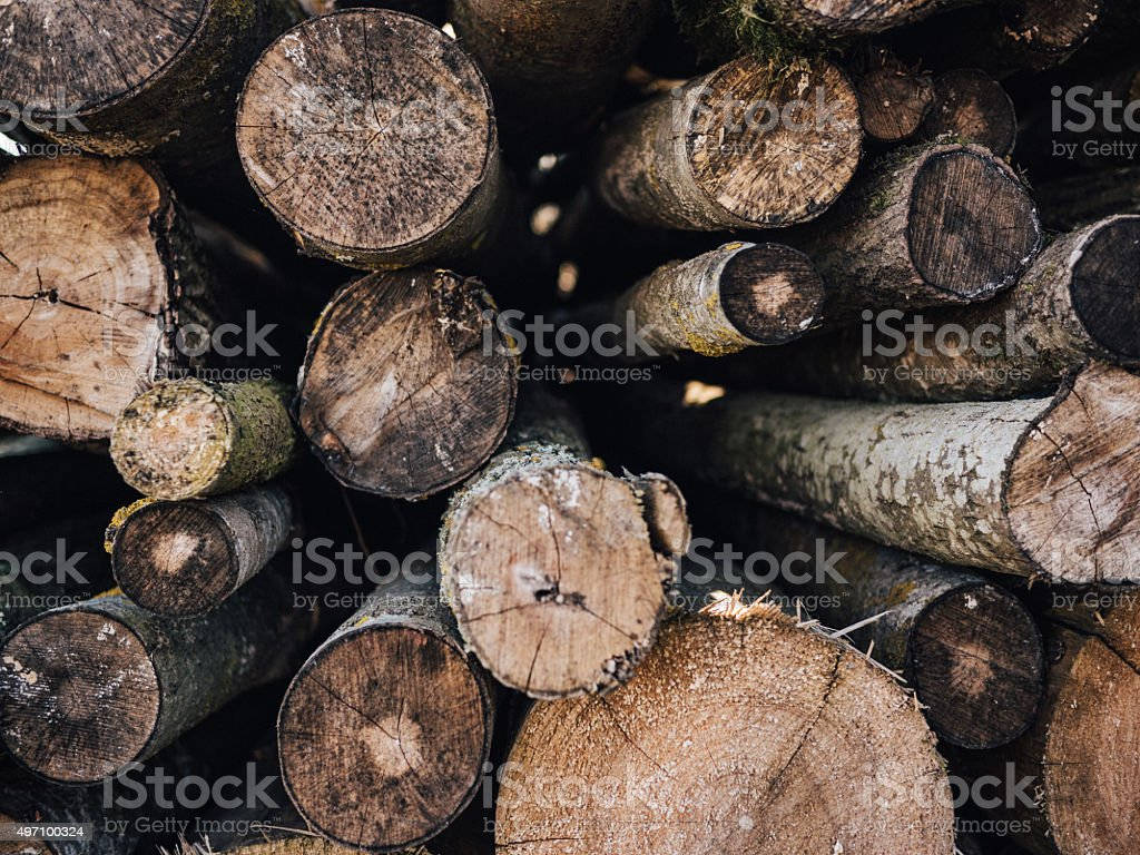 tree logs background stock photo