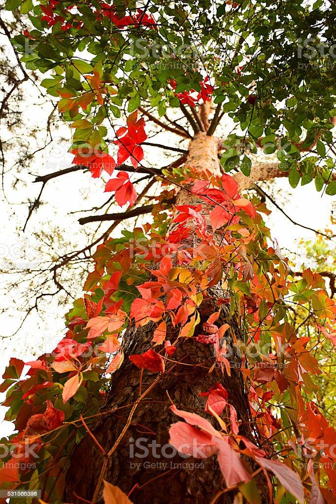 Tree Looking up stock photo