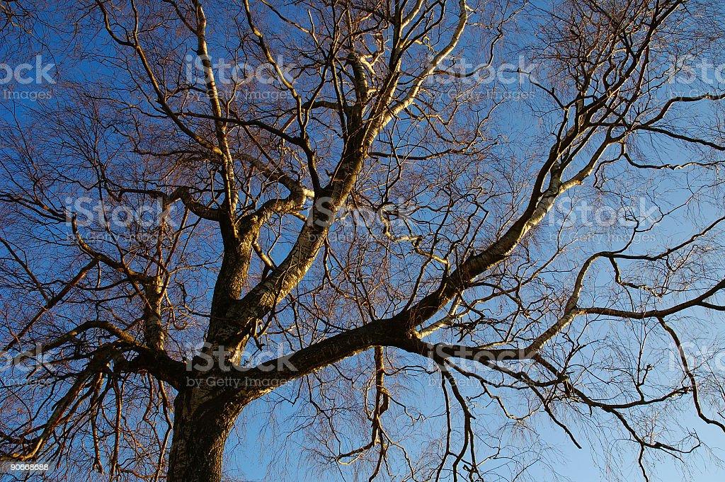 Tree loves sky royalty-free stock photo