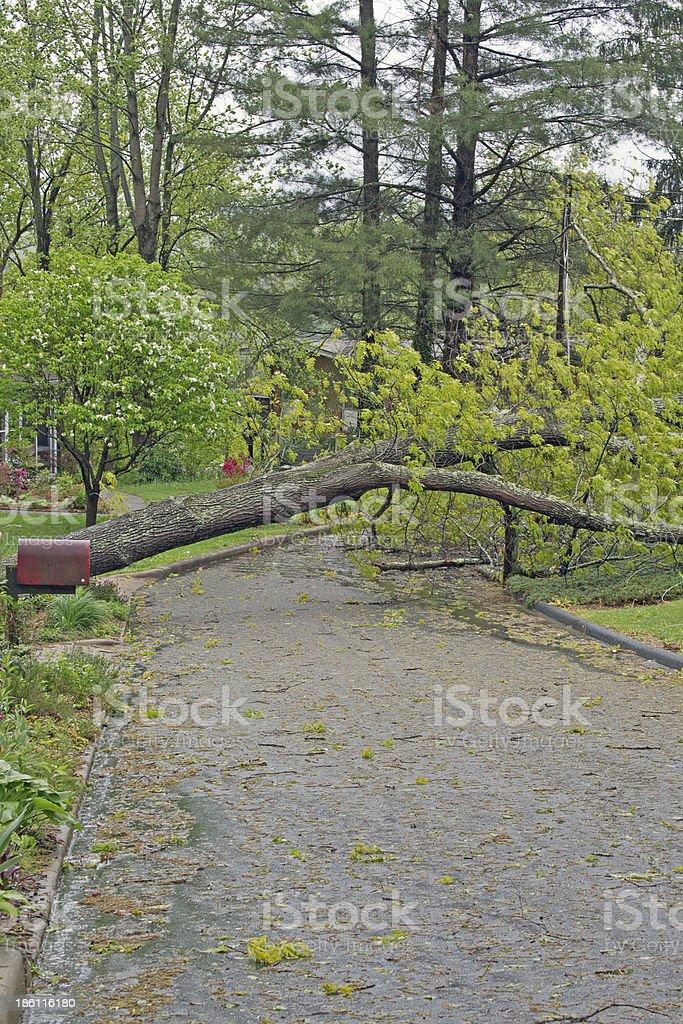 Tree Lying Across Street royalty-free stock photo