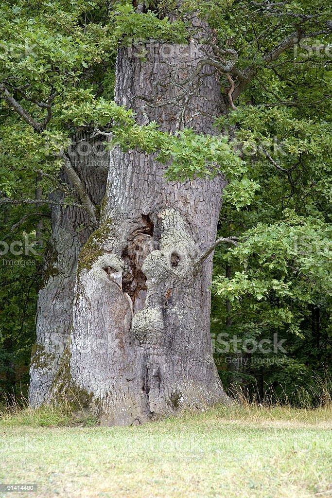 Tree man royalty-free stock photo