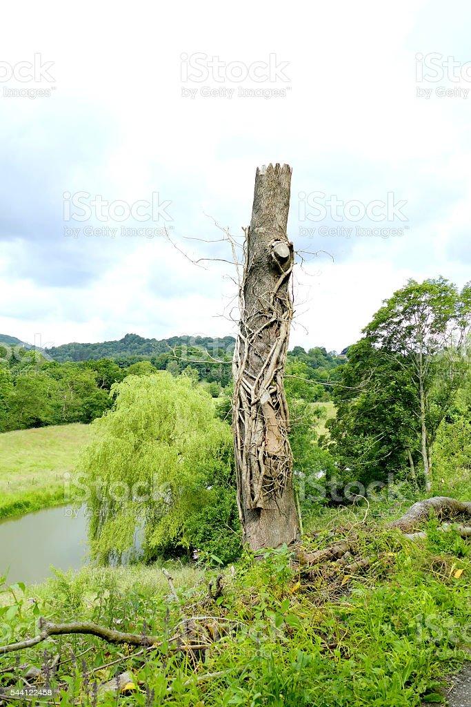 Tree management. stock photo