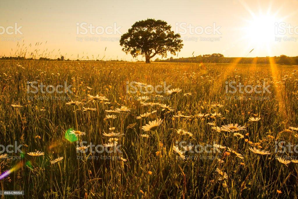 Tree, meadow, sunbeam stock photo