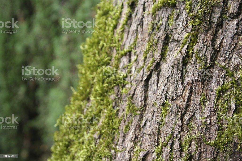 Tree Moss stock photo