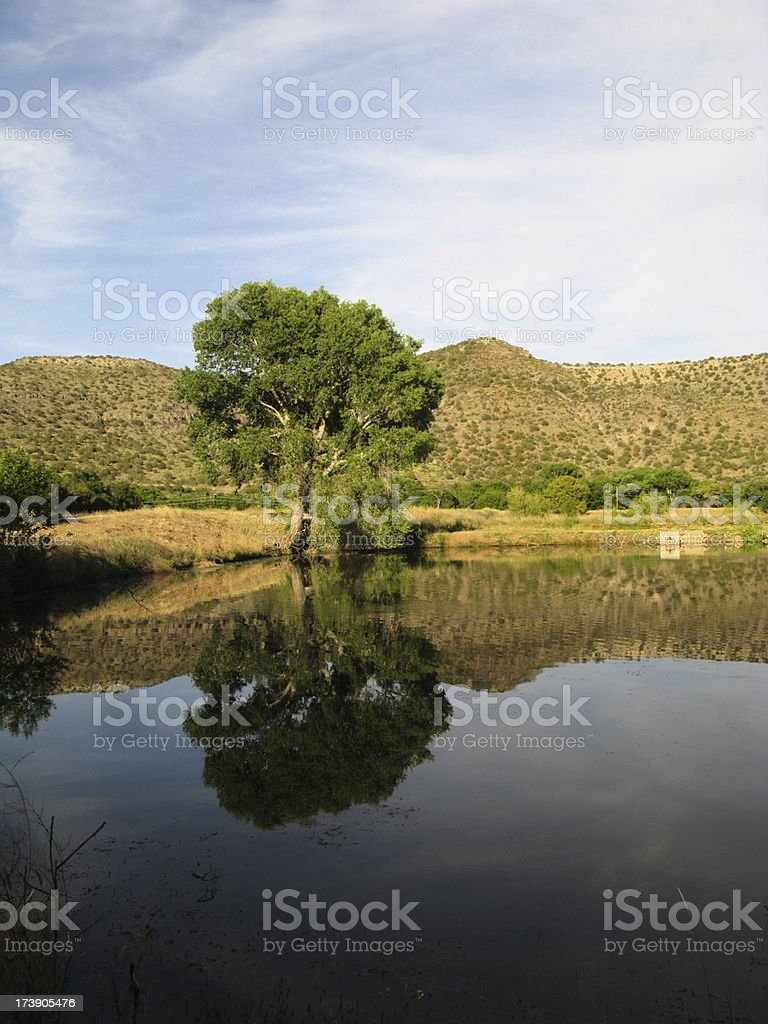 Tree Mountain Reflection Pond royalty-free stock photo