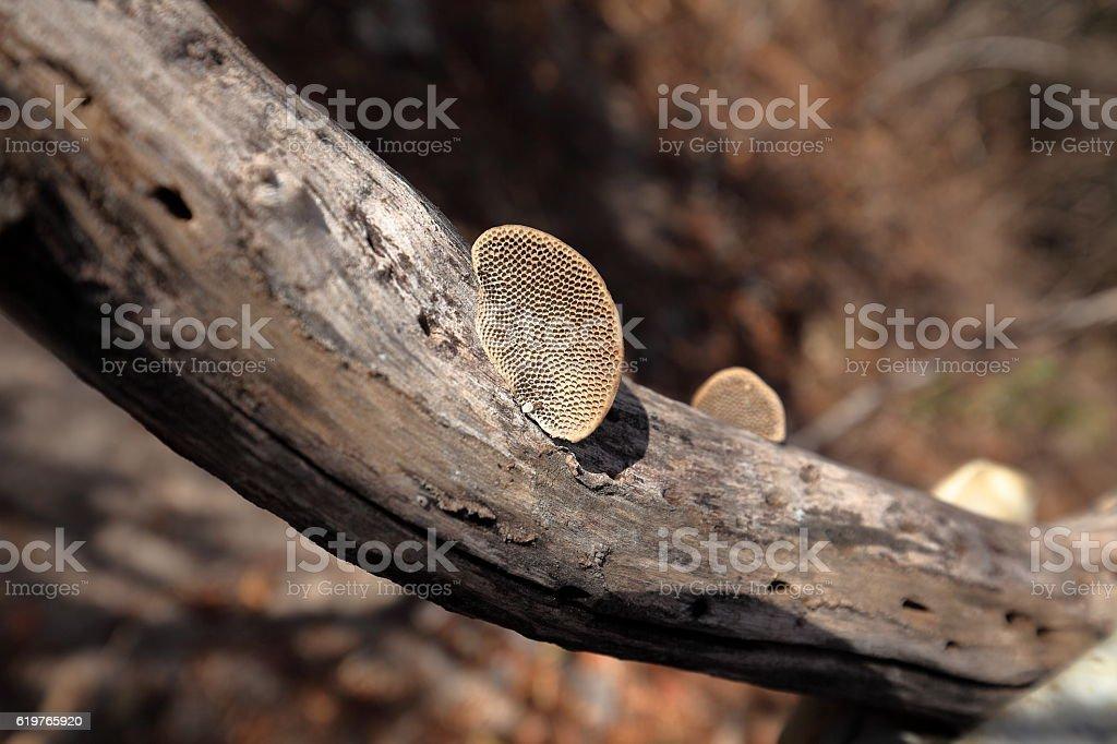 Tree mushroom in the Caatinga of Brazil stock photo