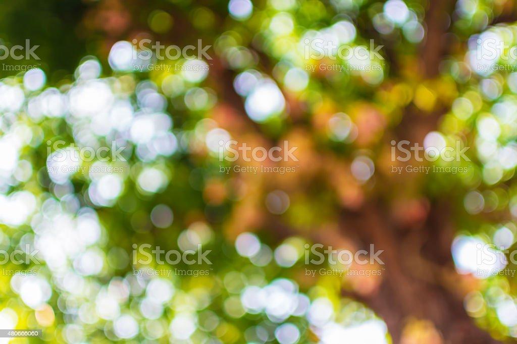 Tree Nature Bokeh. Blurred green background stock photo