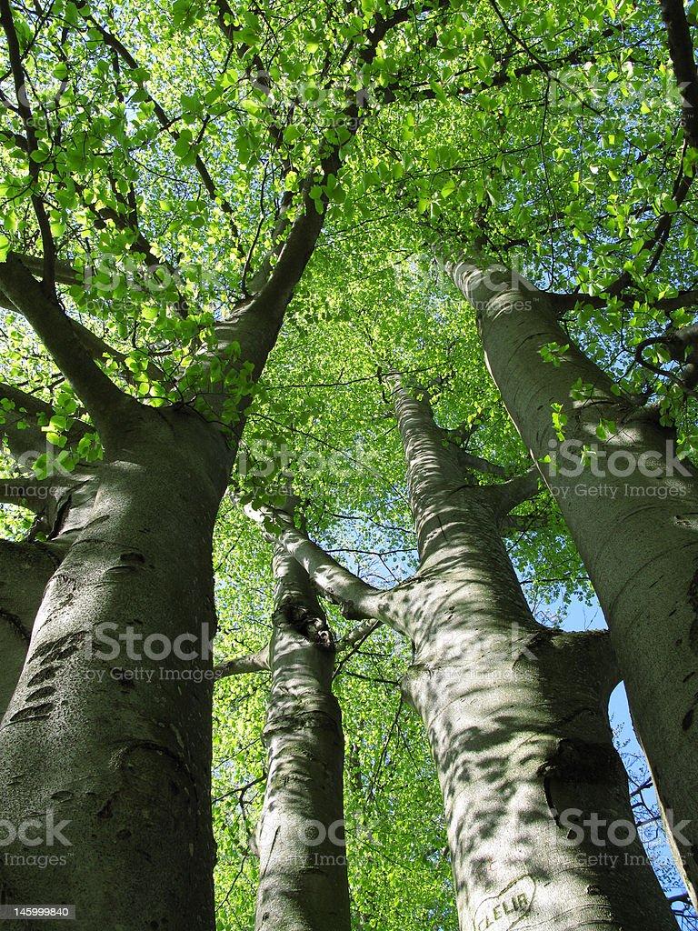 Tree near Old Castle in tirol, austria royalty-free stock photo