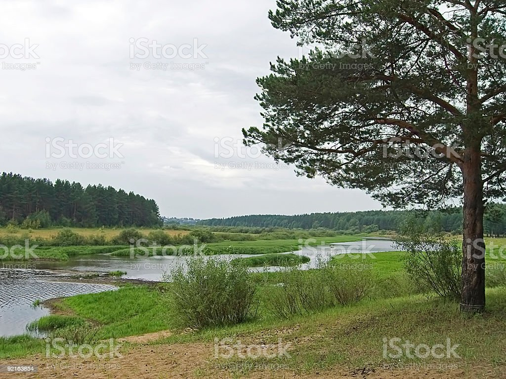 Tree Near River royalty-free stock photo