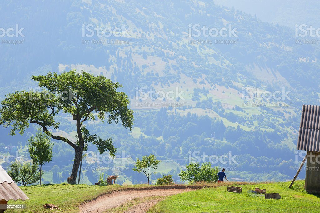 tree near road in mountains stock photo