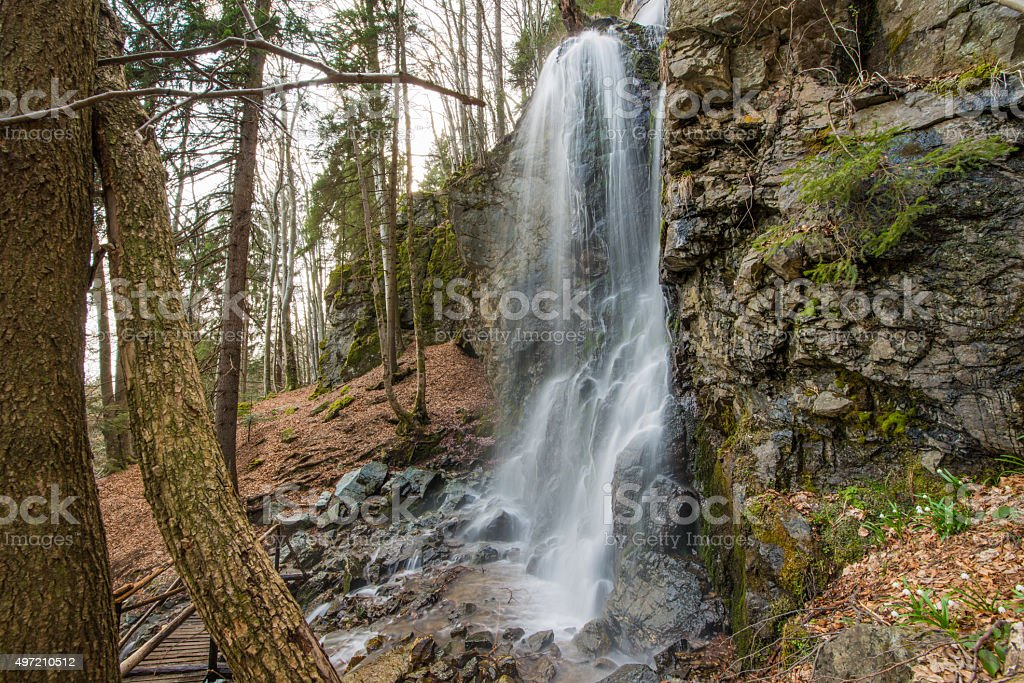 Tree near waterfall in the forest stock photo